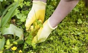Comment Empecher L Herbe De Pousser Dans Le Gravier : garder les mauvaises herbes de votre pelouse trucs pratiques ~ Dailycaller-alerts.com Idées de Décoration