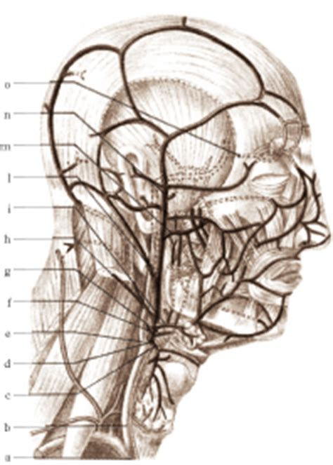 aneurisma carotide interna carotide in quot dizionario di medicina quot