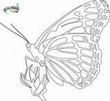 Monarch Butterfly Coloring Template Butterflies Printable Detailed Mandala Disney Cocoon Tessellation Princess Popular Bing sketch template