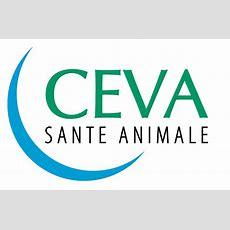 Ceva  Logopedia  Fandom Powered By Wikia