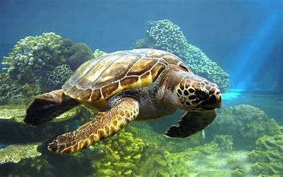 Turtle Wallpapers Turtles Background Sea Backgrounds Save