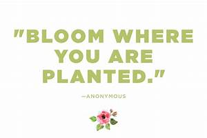 Flower Quotes: 12 Calming Thoughts on Flowers | Reader's ...