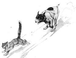 cerita kucing  anjing