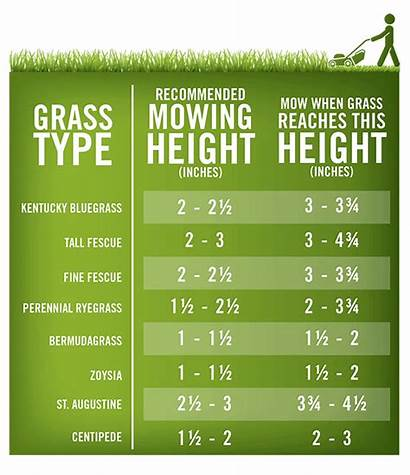 Lawn Grass Mowing Height Care Chart Mow
