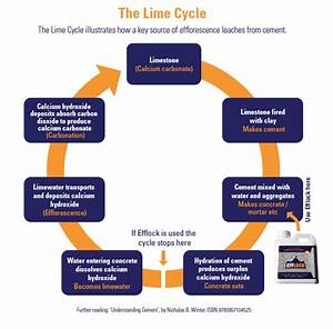 Understanding  U0026 39 The Lime Cycle U0026 39  Helps To Understand Why We