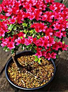 Immergrüne Winterharte Kübelpflanzen : winterharte k belpflanzen wien magazin ~ Markanthonyermac.com Haus und Dekorationen