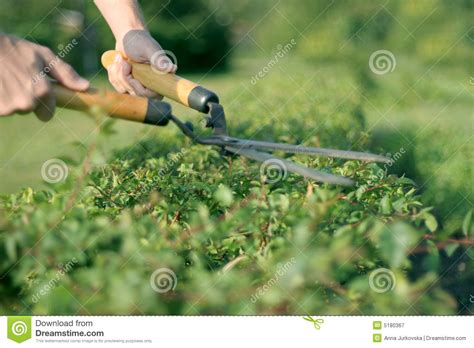 trimming bushes someone trimming bushes royalty free stock photography