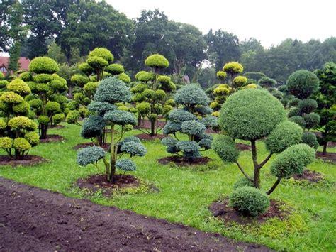 Anspruchslose Garten Pflanzen by Garten Was Wann Pflanzen Wohndesign