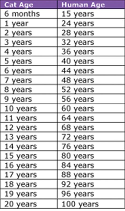 cat years chart cat age chart in human years kitty cat condos