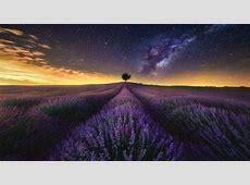 photography, Landscape, Nature, Lavender, Field, Flowers