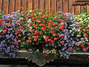 balkonblumen terrassenblumen topfblumen With französischer balkon mit welche blumen blühen den ganzen sommer im garten
