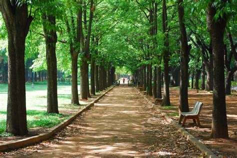 cubbon park bengaluru  images  wallpapers hd
