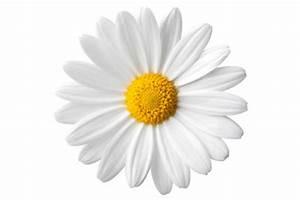 Blumen Im Juli : blumen im juli anpflanzen ratschl ge ~ Lizthompson.info Haus und Dekorationen