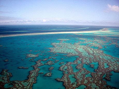 grande barriere de corail grande barriere de corail
