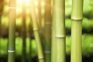 Bambus Im Garten : bambus pflanzen im m rz aktiv werden gartenpflanzen ~ Michelbontemps.com Haus und Dekorationen