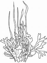 Seaweed Coloring Drawing Pages Ocean Plants Printable Drawings Coral Sea Underwater Plant Google Line Cartoon Colouring Template Mycoloring Colors Printables sketch template