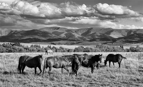 horses montana herd wild horse country mountains hills crazy portrait tau0 navigation posts