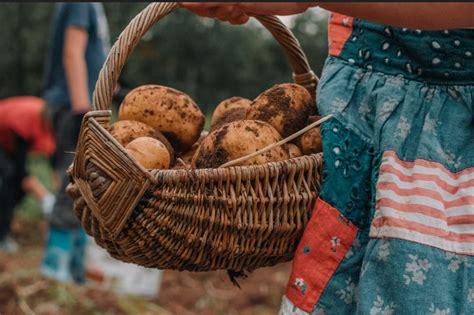 Kartupeļu ēdieni - cepti krāsnī, ar mērcītēm, stampāti un ...