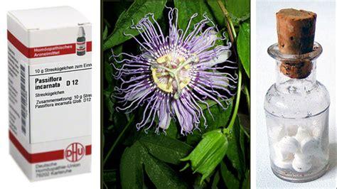 passiflora homoeopathie fuer katzen mypassiflorade