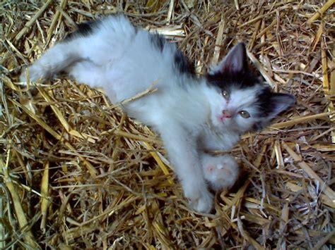 Crunchyroll Adorable And Info Crunchyroll Adorable Kittens Info