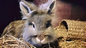 Small, Pet, Hotel, -, Higherwell, Farm