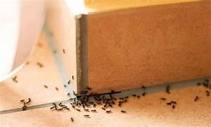 Anti Fourmi Naturel : anti fourmi 22 solutions r pulsives naturelles et efficaces ~ Carolinahurricanesstore.com Idées de Décoration