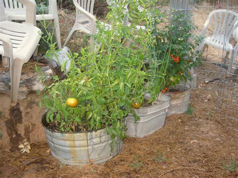 tubs in gardens my galvanized wash tub garden flea market gardening