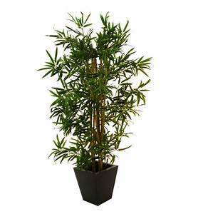 Bambus Pflege Zimmerpflanze : bambus zimmerpflanze kaufen bambus pflanze kaufen bei obi ~ Michelbontemps.com Haus und Dekorationen