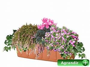 Fleur D Hiver Pour Jardinière : faire ses jardini res d 39 automne ~ Dailycaller-alerts.com Idées de Décoration