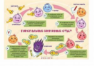 Препараты повышающие иммунитет при папилломе
