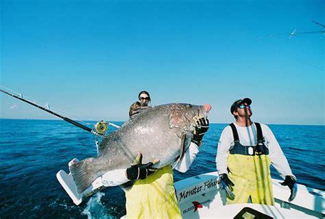 grouper warsaw misc marktheshark copyright file