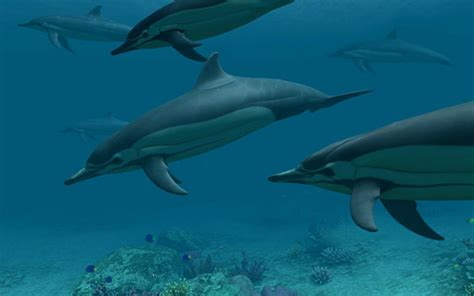 Dolphins 3d Screensaver And Animated Wallpaper - dolphins 3d screensaver 1 0 build 3 скринсейверы рыбки