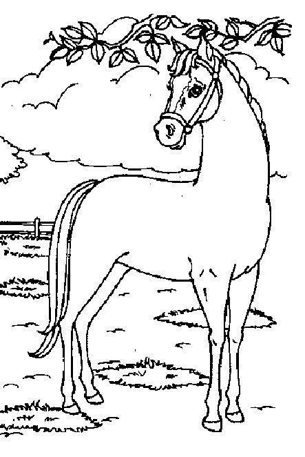 De Mooiste Kleurplaten Paarden by 8 Best Images About Paarden Tekeningen On Bad