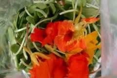 Wie Lange Braucht Farbe Zum Trocknen : kapuzinerkresse im topf tipps zu sorten pflanzen pflege ~ Markanthonyermac.com Haus und Dekorationen