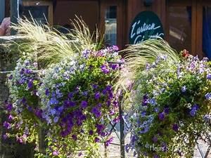 Jardiniere Fleurie Plein Soleil : composition jardiniere plein soleil ~ Melissatoandfro.com Idées de Décoration