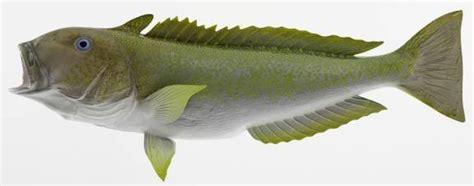 miami tilefish fishing miami beach tilefish fishing