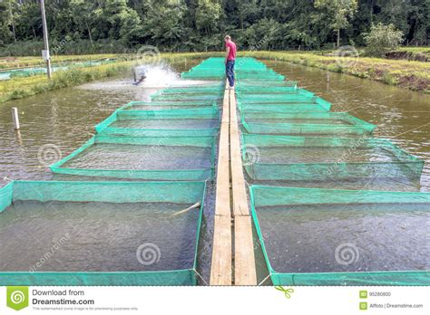 fish farm editorial image image  water seafood