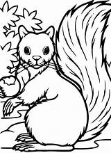 Squirrel Cute Coloring Pages Getdrawings sketch template