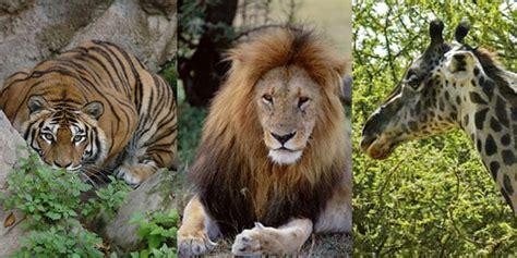 cral baxi zoo safari