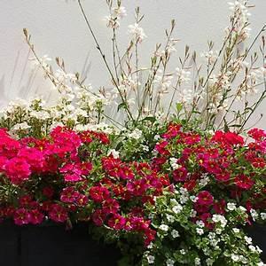 pflanzen fur den balkon in weiss With französischer balkon mit zierkies blau garten