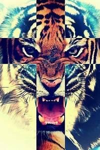 Tiger Tumblr Hipster (Good Galleries) | I'm weird ...