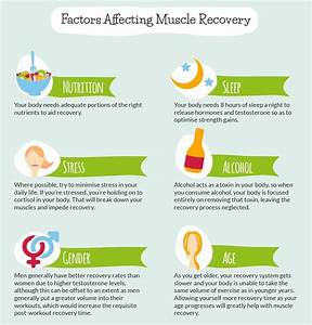 Testosterone Muscle Recovery