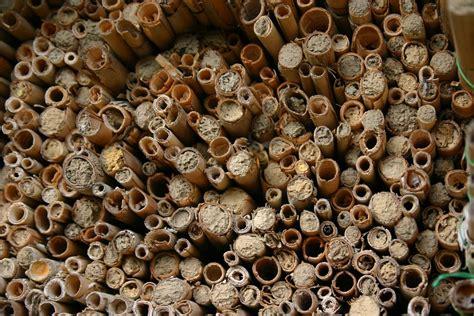 wespen im winter wie uberwintern bienen