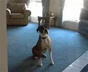 Dog Walk GIF - Find & Share on GIPHY