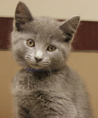 kitty city adoption center city  fort wayne