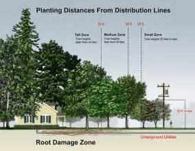 tree height illustration
