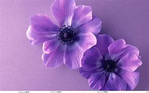 Cute Purple Backgrounds - Wallpaper Cave