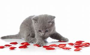 We Rank the Lovability of Valentine's Day Cat Photos - Catster