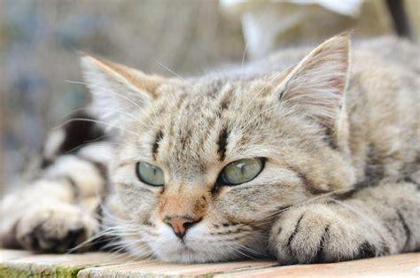 cat cats better dogs than why reasons dog secrets wants terrifying kill cheatsheet agile lying down