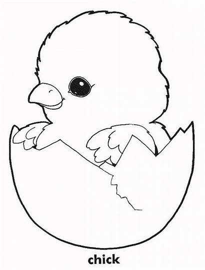 Coloring Chickens Chicken Pages Printable Egg Sheets